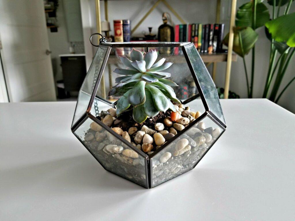 Indoor succulent