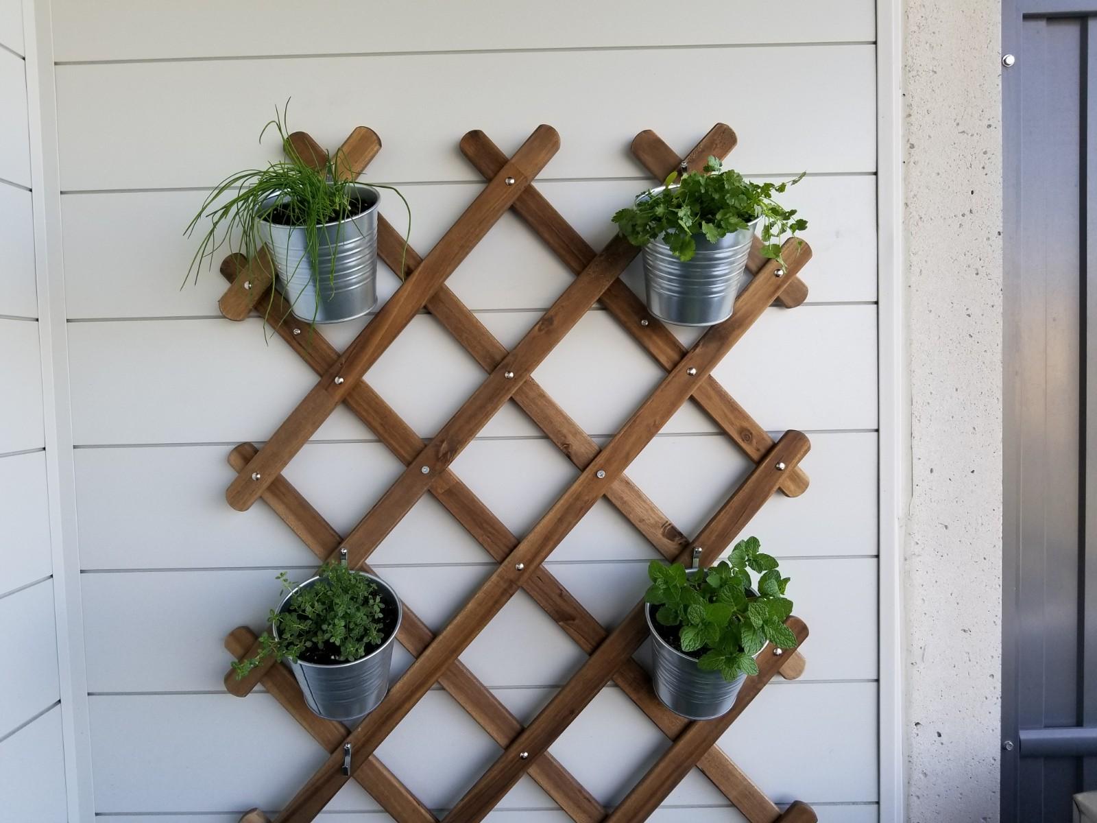 Balcony garden herbs